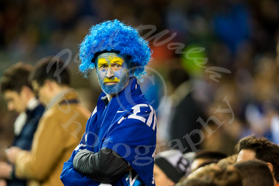 Leinster fan